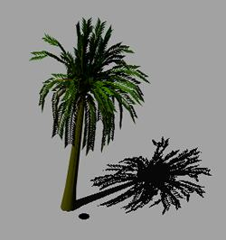 Palmera 3D