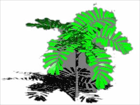 3d palm in AutoCAD | Download CAD free (137 09 KB) | Bibliocad