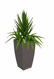 Planta de Interior 3d