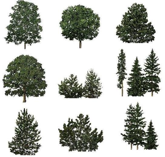 Plan And Elevation Of Trees : Trees in elevation autocad download cad free