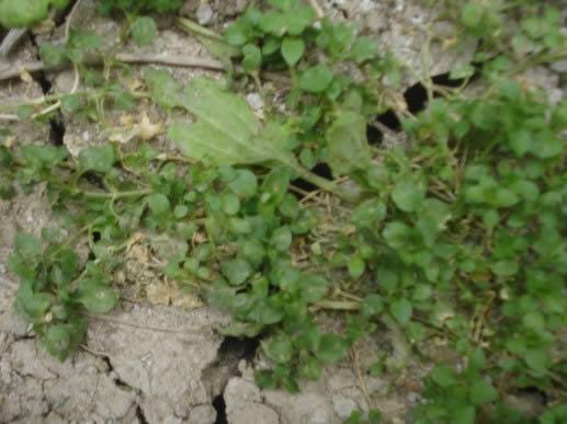 Piso de tierra con vegetacion
