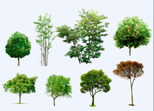 Plantas para photoshop buscar con google render render for Arboles y arbustos para jardin