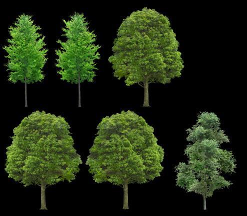 trees png  zip cad   mb bibliocad