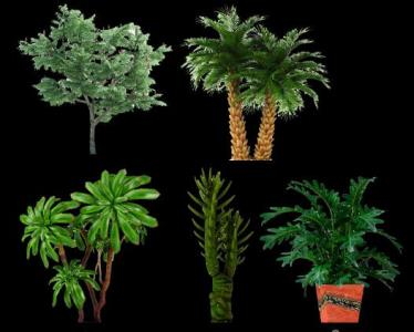 Trees PNG pack