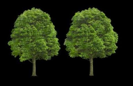 Cut out trees png