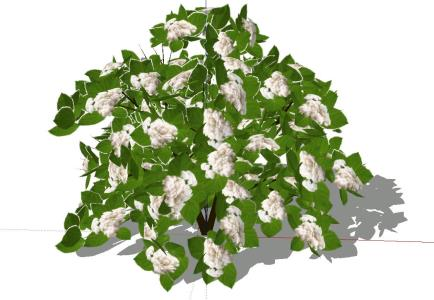 Plant - Bush