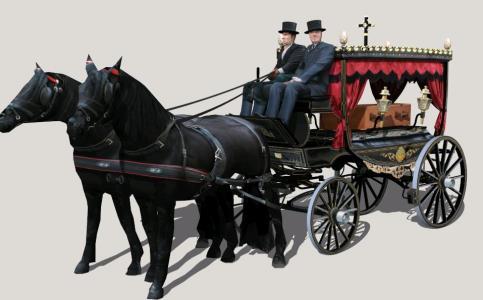 Hearse horse