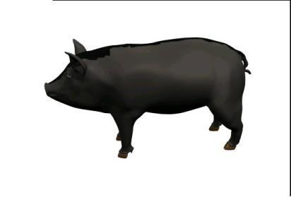 3dmax Pig