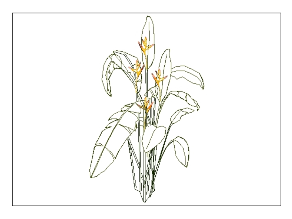 Heliconia flower elevation