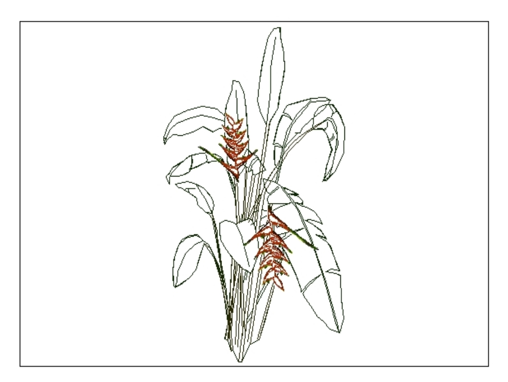 Elevation 3 of heliconia flower