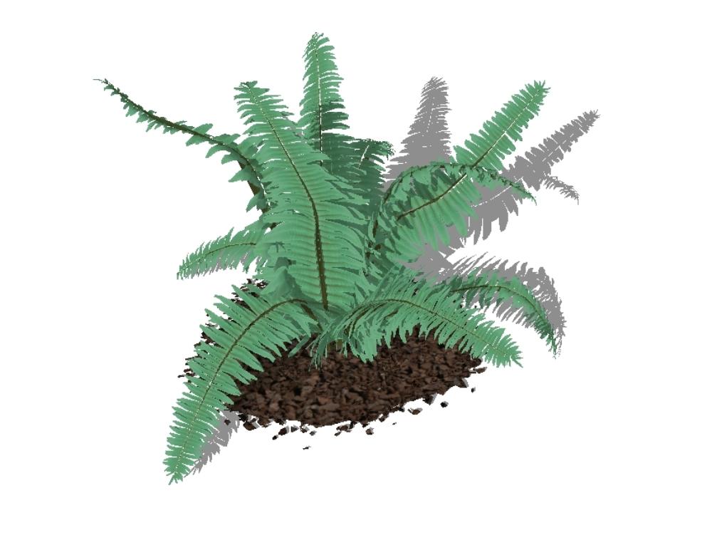 Plantas para jardines 3d - helechos