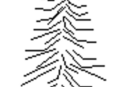 2D Coniferous tree - Elevation