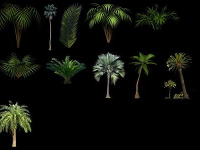 Palm collection 2 PNG